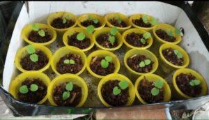 Gieo hạt giống địa lan