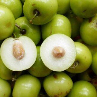 Hạt giống táo chua